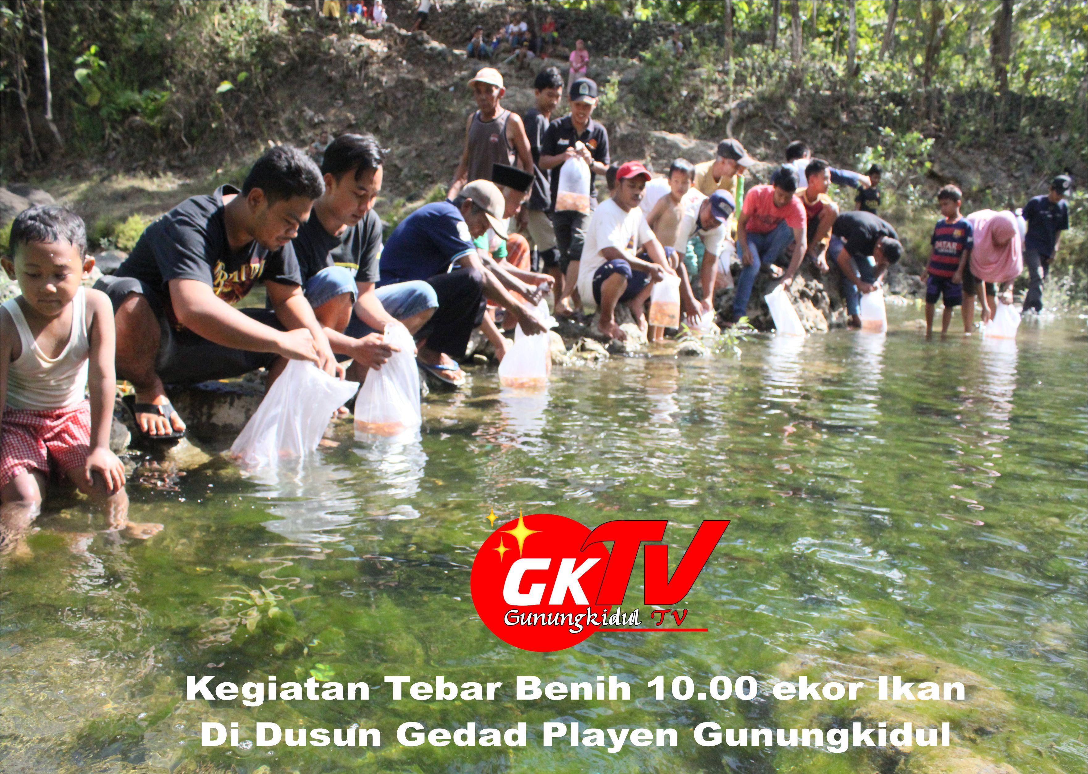 Tuk Konservasi Sungai, Warga Dusun Gedad Playen dan KKN UGM Sebar 10 000 Benih Ikan