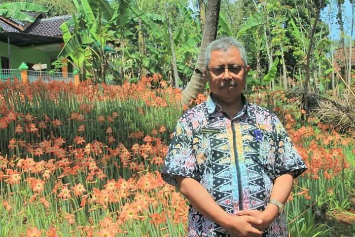 Bunga Amaryllis Patuk: Dulu Diremehkan Kini Terkenal