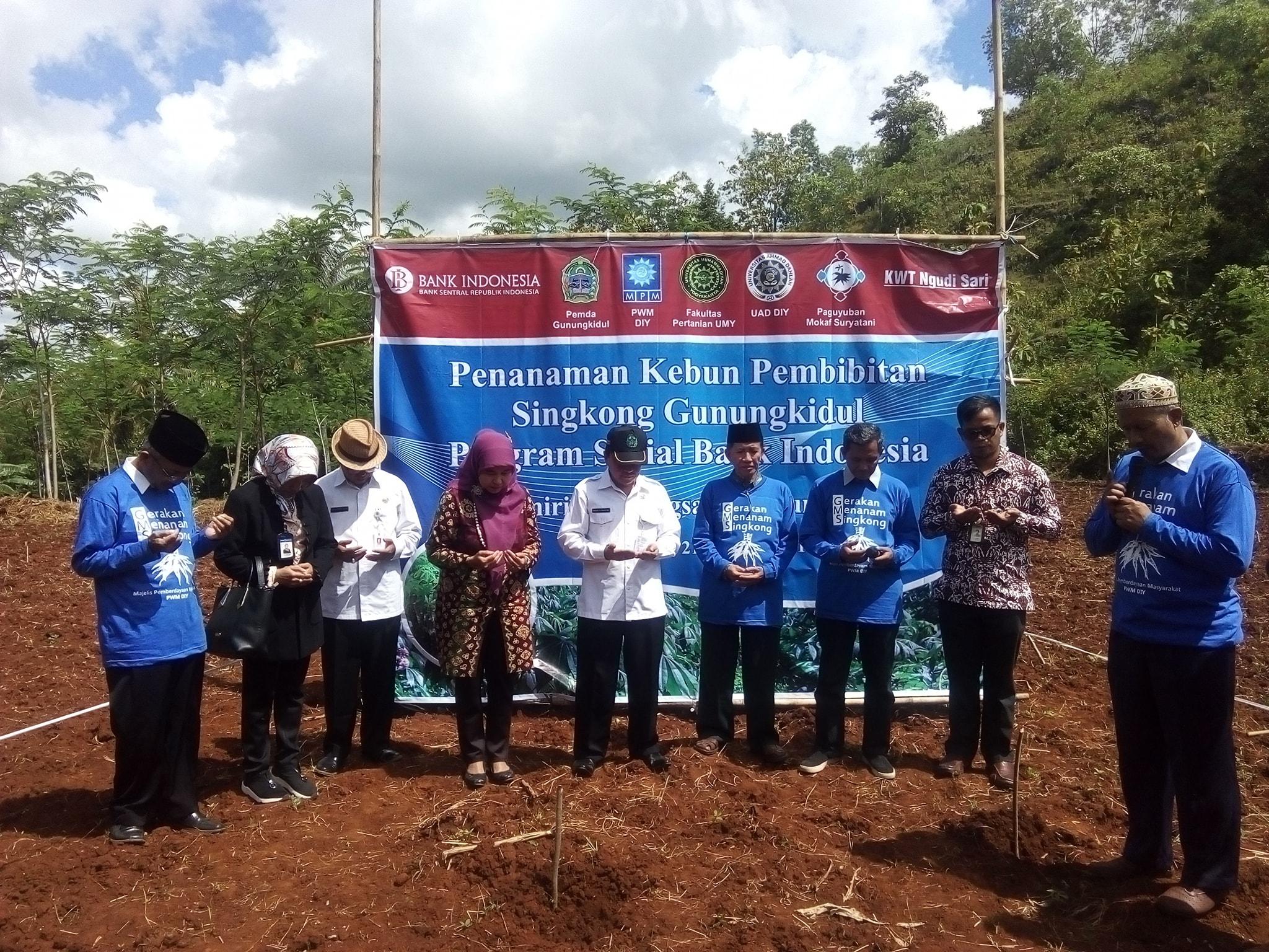 Muhammadiyah Adakan Penanaman Bibit Singkong Di Tanjungsari Gunungkidul
